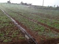 田园喷灌带
